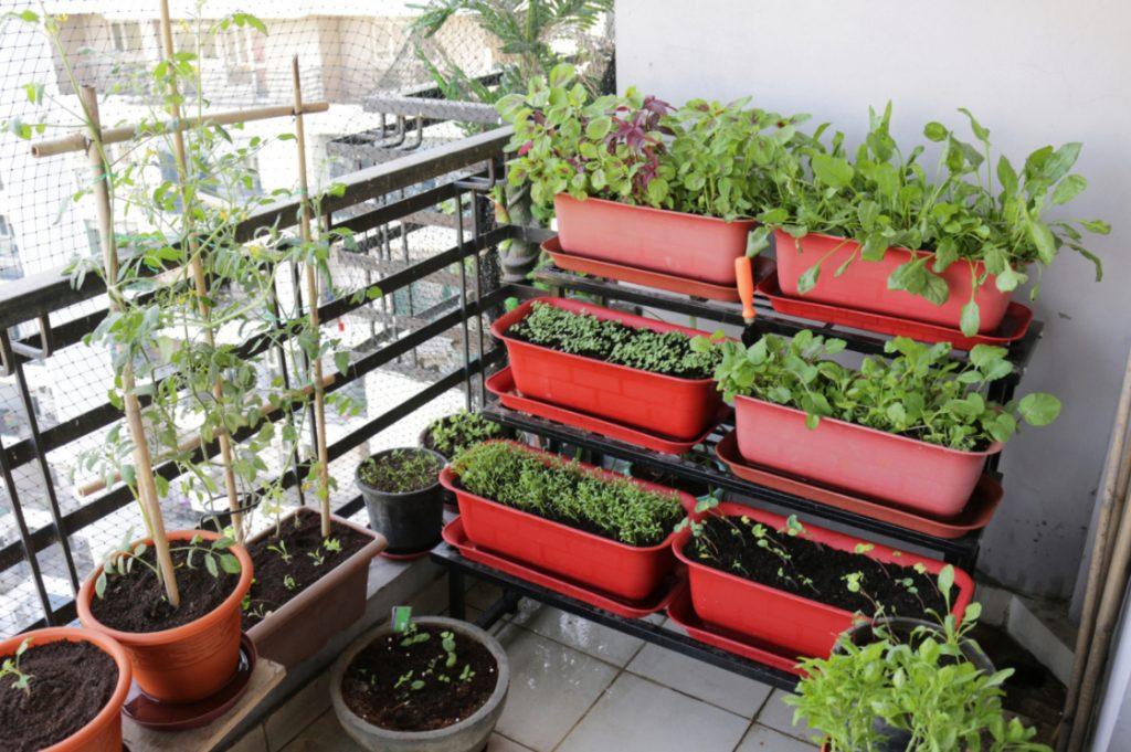 grow plants to save money
